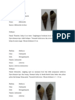 Klasifikasi bentoz