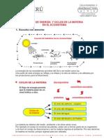 FLUJO DE ENERGÍA EN UN ECOSISTEMA