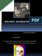 Anatomia_Bucodentaria_