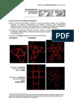Sólidos platónicos 2 Planificações com Polidrom