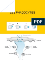 les phagocytes
