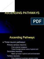 Neuro 14 Ascending Tracts Student