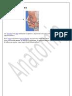 Anatomia Musculos de La Cara