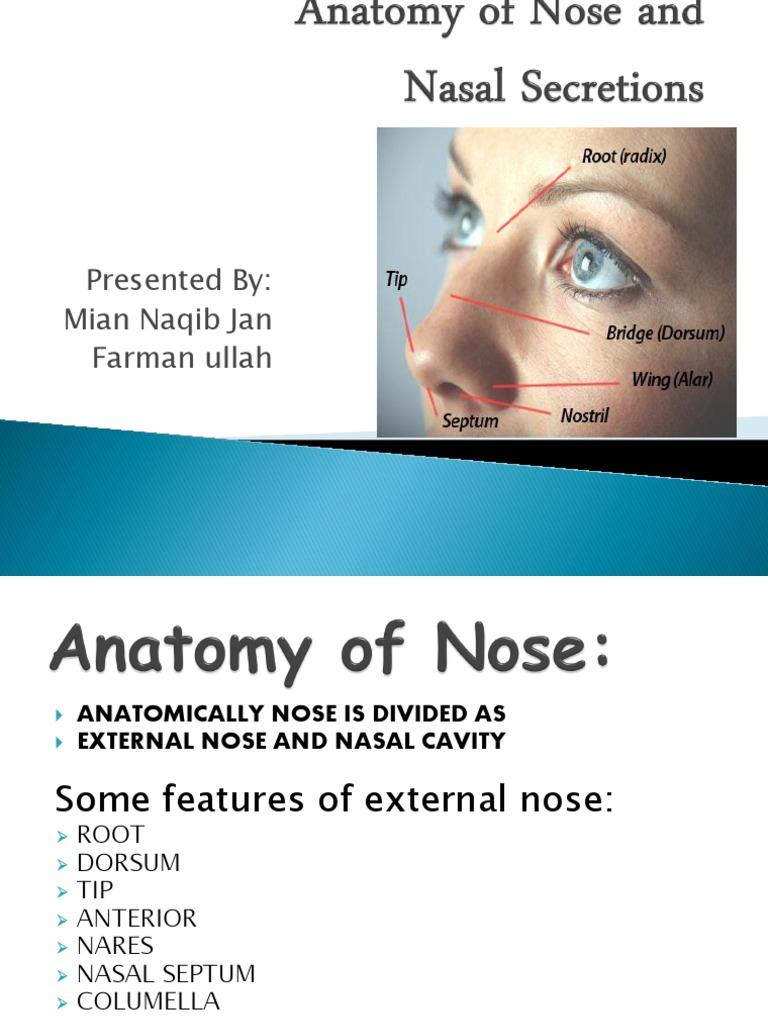 Anterior Nares Anatomy Image collections - human body anatomy