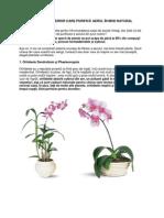 7 Flori de Apartament Pentru Purificarea Aerului