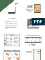 DNA Repair Predoc Print