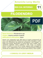 Schede_botaniche_Filodendro