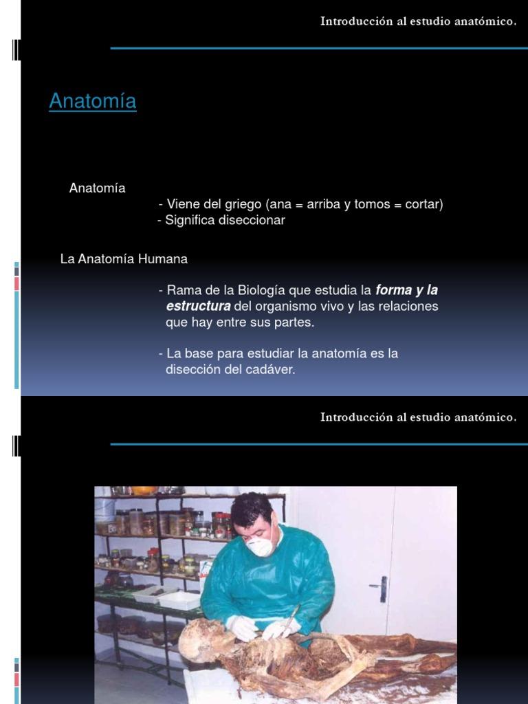 Lujoso La Forma De Estudiar La Anatomía Modelo - Anatomía de Las ...