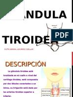 Glándula tiroidea