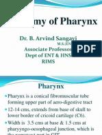 Anatomy & Physiology of Pharynx