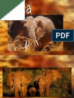 (29) Afrika