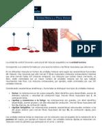 Regulacion Muscular y Formacion Reticular