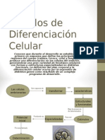 Modelos de Diferenciación Celular