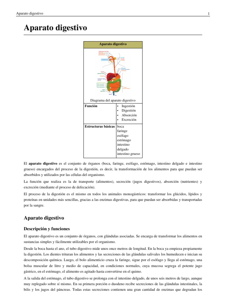 Aparato Digestivo Kiwi