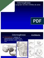 Odontogenese PPT