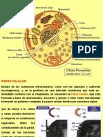 Los Gram-100408011008-phpapp01