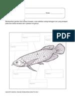 AKTIVITI 2-Strurktur ikan kelisa