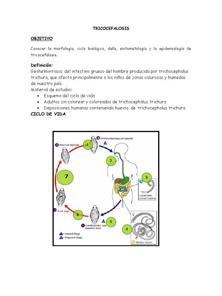 trichocephalosis diéta gyógyszer férgek kezelése
