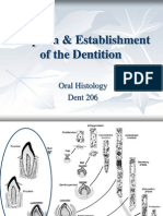 Eruption Establishment of Dentition