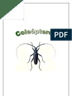 zoologia_forestal_-_entomologia_-_cole____pteros