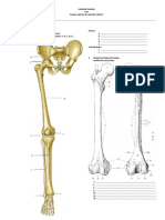 Anatomia Miembro Inferior UAP Examen