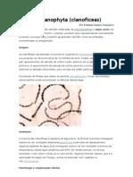 Divisão Cyanophyta