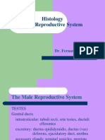 Histology_Male Reproductive System