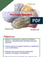 299 fisiologia-sensorial