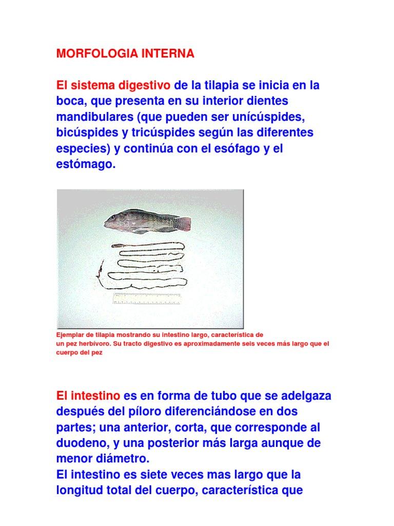 Perfecto Anatomía Externa Del Pescado Y Sus Funciones Colección de ...