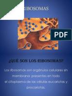 RIBOSOMAS presentacion