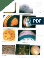 Fotos das lâminas Botânica