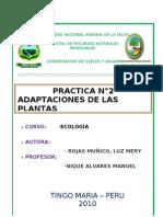 adaptacion de las plantas ROJAS MUÑICO LUZ