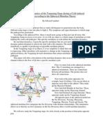 Yangming Meridian Dynamics