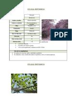 Fichas botanicas