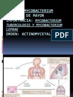 mycobacterium listo