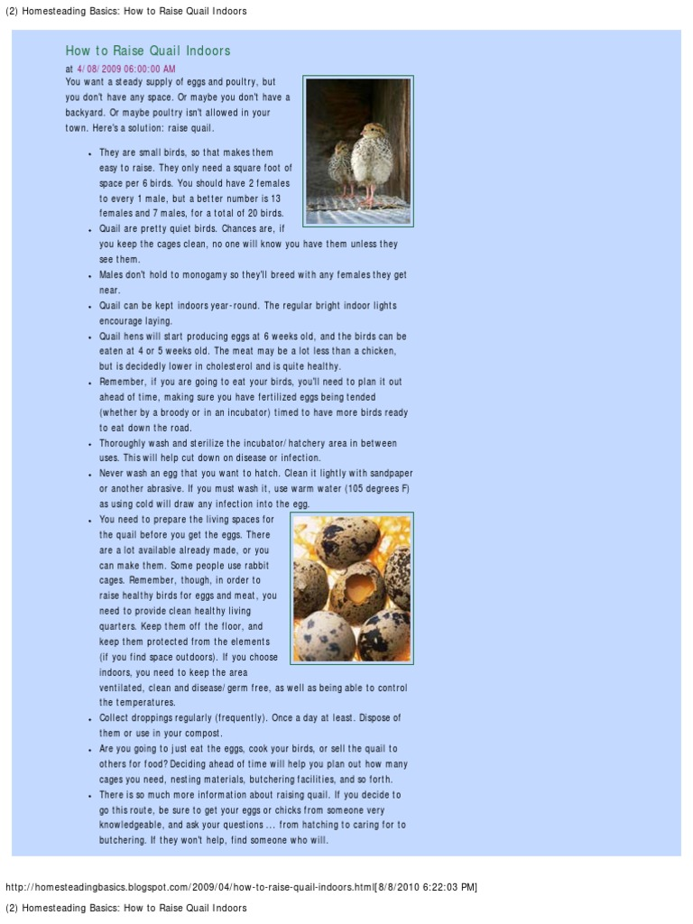 2 homesteading basics how to raise quail indoors chicken poultry