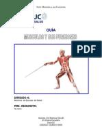 guia musculos anatomía