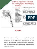 Clase 9 Funciones Cerebra Les Superiores 2012