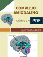 Complejo Amigdalino - Candy Human