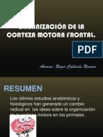 ORGANIZACIÓN DE LA CORTEZA FRONTAL MOTORA - Roger Calderon