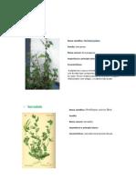 PF - Plantas