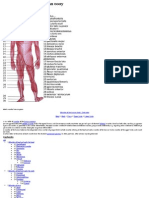 List of Muscles of the Human Body