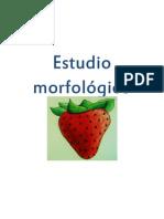 Estudio morfológico