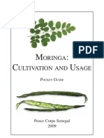 Moringa Cultivation and Its Uses