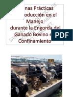 bovinos de carne 11