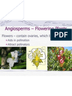 Angiosperms – Flowering Plants