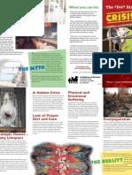 The Pet Bird Crisis