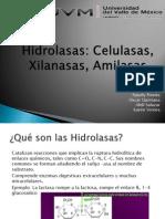 hidrolasas
