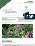 Himalayan Balsam Data Sheet