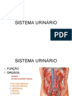 SISTEMA URINÁRIO1